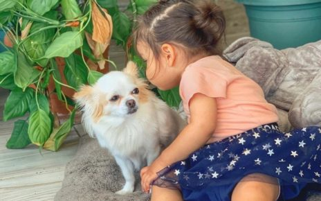 Are chihuahuas good with children? 3