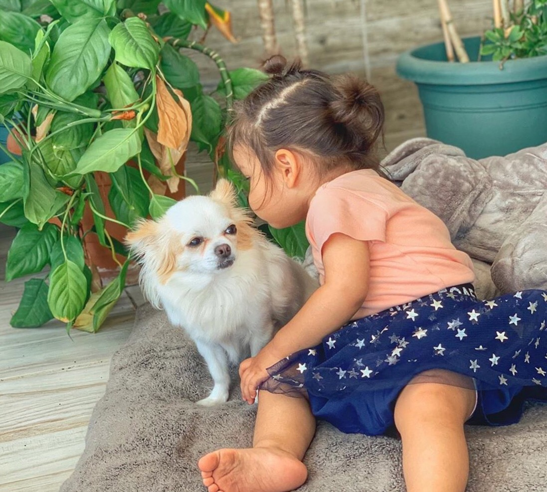 Are chihuahuas good with children?