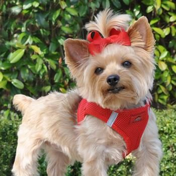 American River Ultra Choke-Free Mesh Dog Harness by Doggie Design 1