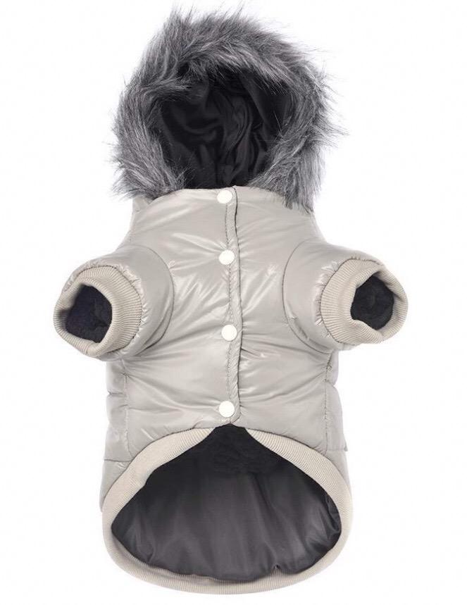 Chihuahua jackets 7