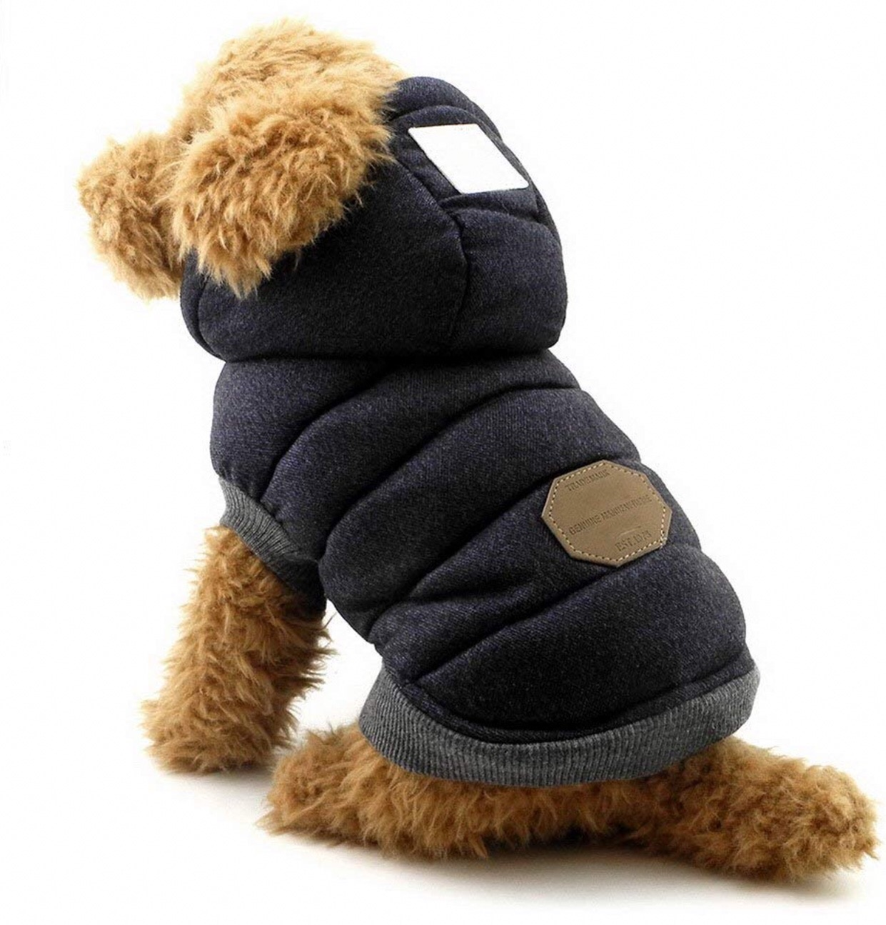 Chihuahua jackets 3