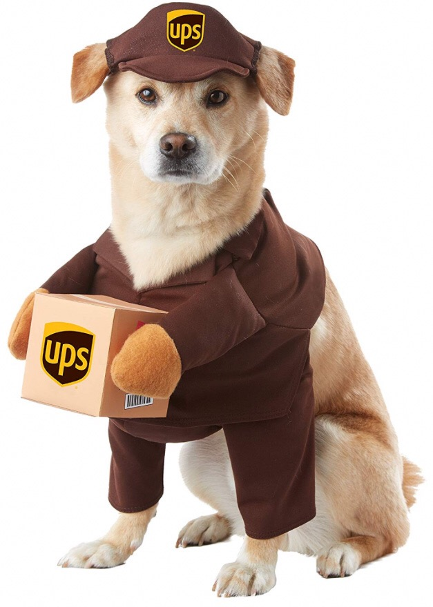 Chihuahua costumes 7