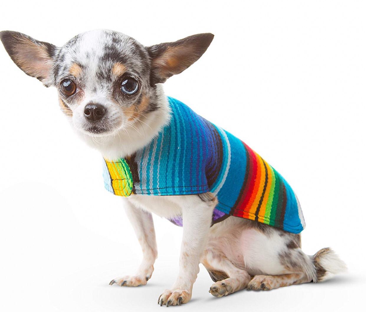 Chihuahua jackets 1