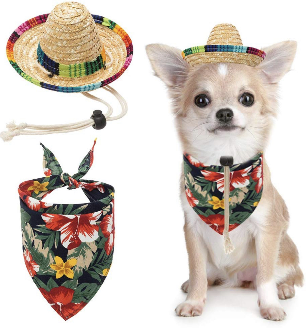 Chihuahua hats - The Cutest hats for Chihuahuas 26