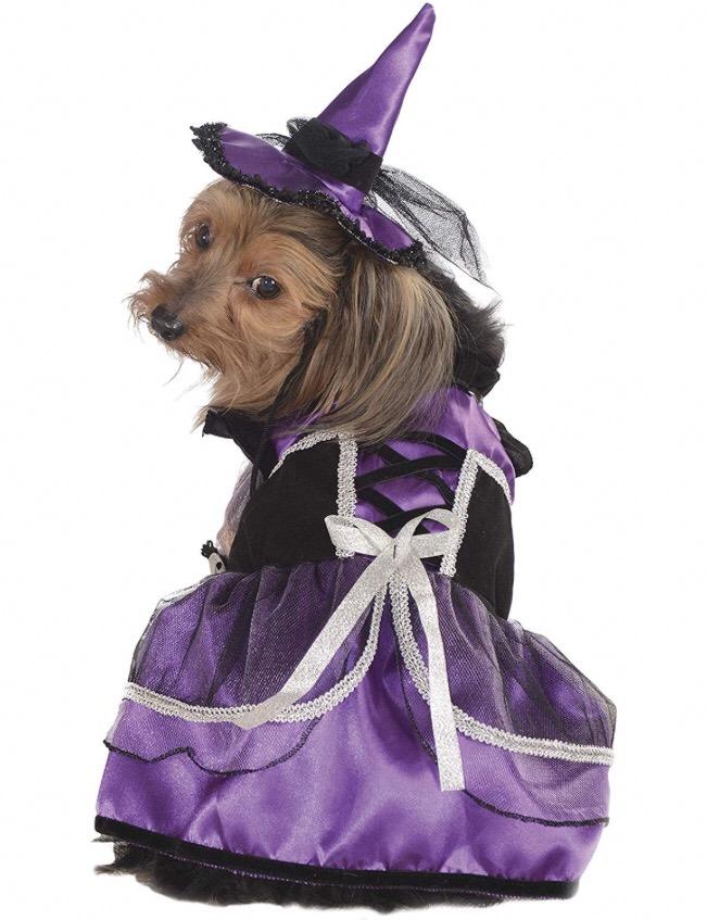 Chihuahua costumes 4