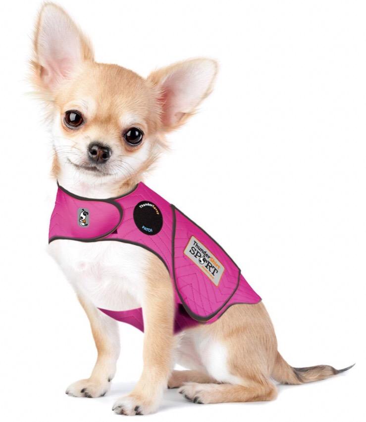 Chihuahua jackets 4